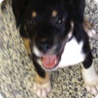 Adopt A Pet :: Sarina - Washington, PA