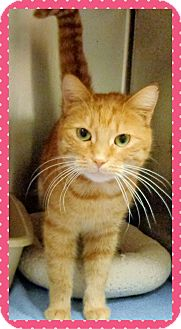 Domestic Shorthair Cat for adoption in Marietta, Georgia - DESIREE - reclaimed