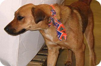 Shepherd (Unknown Type) Mix Dog for adoption in Melrose, Florida - Sister