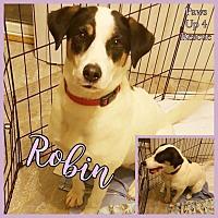 Adopt A Pet :: Robin - Joliet, IL
