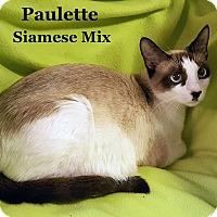 Adopt A Pet :: Paulette - Bentonville, AR