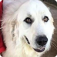 Adopt A Pet :: Hera - Kyle, TX