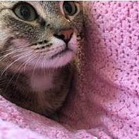 Adopt A Pet :: Posey - Novato, CA