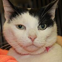 Adopt A Pet :: MAGNETO - Clayton, NJ