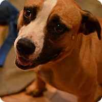 Adopt A Pet :: Marina - Palm City, FL