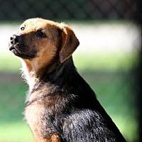 Adopt A Pet :: Summer - Ponca City, OK