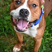 Adopt A Pet :: Benny - Reisterstown, MD