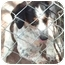 Photo 3 - Beagle/Rat Terrier Mix Dog for adoption in Osseo, Minnesota - Freckles