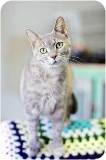 Domestic Shorthair Cat for adoption in Port Hope, Ontario - Elena