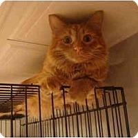 Adopt A Pet :: Pumpkin--PETSMART - Muncie, IN