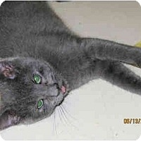 Adopt A Pet :: Lovey - Catasauqua, PA