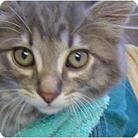 Adopt A Pet :: Simba - Modesto, CA
