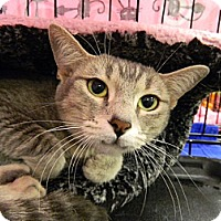 Adopt A Pet :: Grace - The Colony, TX