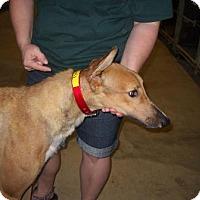 Adopt A Pet :: PG Blazin Boris - Knoxville, TN