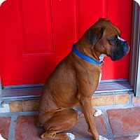Adopt A Pet :: Ogden - Scottsdale, AZ