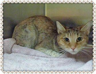 Domestic Shorthair Cat for adoption in Marietta, Georgia - CARMILLA