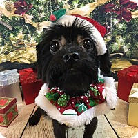 Adopt A Pet :: Leila - Troy, MI