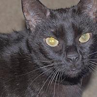 Adopt A Pet :: Gracie 2 - Woodland Hills, CA