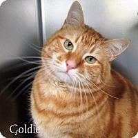 Adopt A Pet :: Goldie - Jackson, NJ