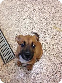 Mixed Breed (Medium) Mix Puppy for adoption in Aiken, South Carolina - Charlize