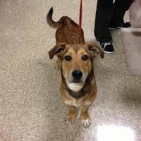 Adopt A Pet :: Mason - Maryville, TN