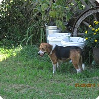 Adopt A Pet :: CHELSEA - Lincolndale, NY