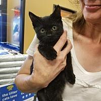 Adopt A Pet :: Macciatto - West Palm Beach, FL