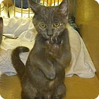 Adopt A Pet :: Fancy - Miami, FL