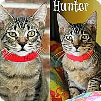 Adopt A Pet :: Hunter - Mobile, AL