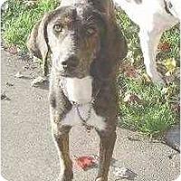 Adopt A Pet :: Sara - Alliance, OH