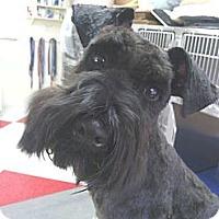 Adopt A Pet :: Chad - Crystal River, FL