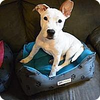 Adopt A Pet :: Baxter - Phillips, WI