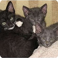 Adopt A Pet :: Isis, Ramseys and Riley - Riverside, RI