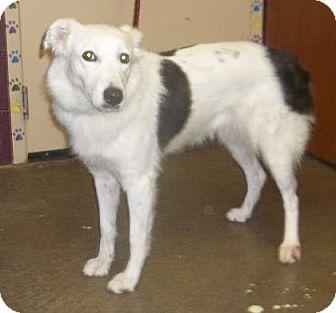 Anatolian Shepherd Mix Dog for adoption in Rapid City, South Dakota - Becca