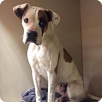 Adopt A Pet :: Sara - Post, TX