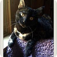 Adopt A Pet :: Magdalenea - McDonough, GA