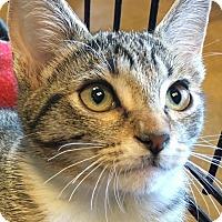 Adopt A Pet :: Autumn - Winchester, CA