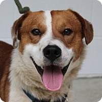 Adopt A Pet :: Lee - Harrisonburg, VA