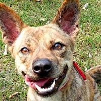 Adopt A Pet :: Yuna - San Ramon, CA
