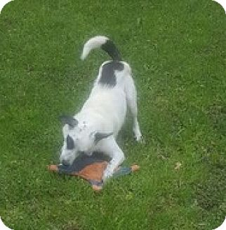 Terrier (Unknown Type, Medium) Mix Dog for adoption in Grafton, Wisconsin - Luna - PENDING