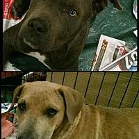 Adopt A Pet :: Comet & Cupid - Pembroke, GA