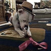 Adopt A Pet :: King 2 - Las Vegas, NV