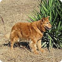 Adopt A Pet :: Buffy - Gardena, CA