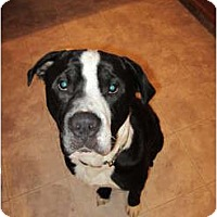 Adopt A Pet :: Farley - Medicine Hat, AB