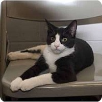 Adopt A Pet :: Sneakers - New Port Richey, FL