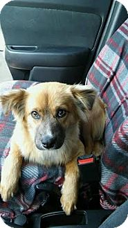 Shepherd (Unknown Type) Mix Dog for adoption in Providence, Rhode Island - Willie