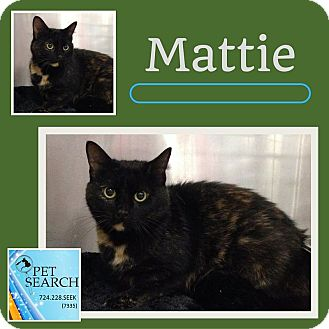 Domestic Shorthair Cat for adoption in Washington, Pennsylvania - Mattie