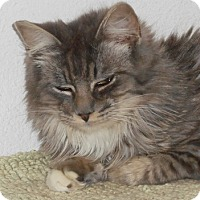 Adopt A Pet :: Donato - North Highlands, CA