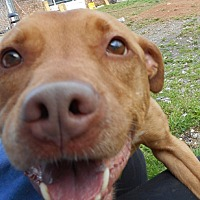 Adopt A Pet :: Cinnamon - Huntsville, AL