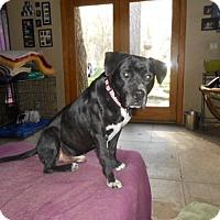 Adopt A Pet :: Moonshine - North Jackson, OH